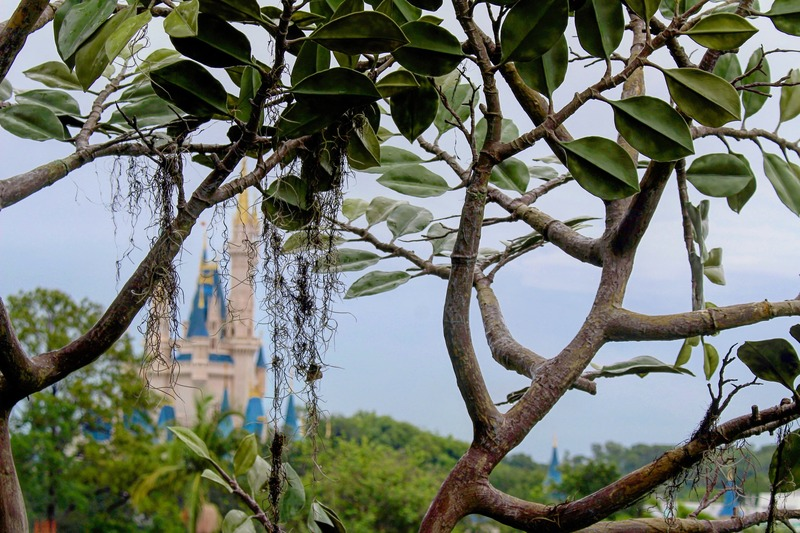 cinderella's castle in the distance